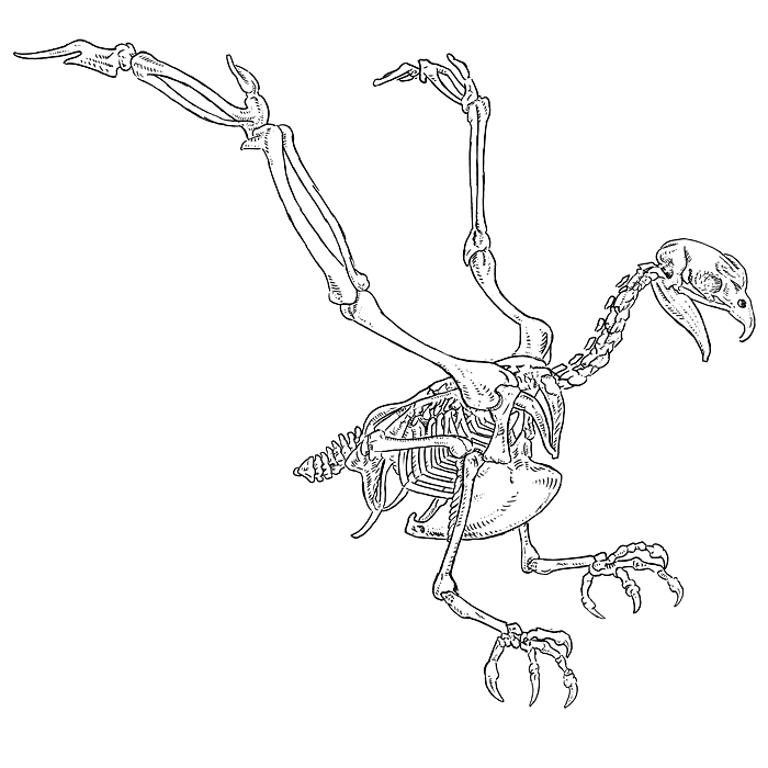 How Tallweird Was Sauroposeidon additionally Dinosaurs Evolved To Birds IMPOSSIBLE besides Eagle Skeleton Diagram also Anatomy2 besides Detail. on foot skeletal system diagram